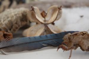 feather bug